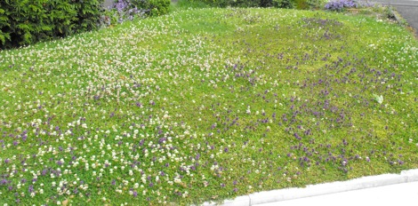Bumblebee Lawn The Best Ive Seen Nurturing Nature