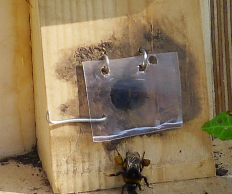 Nurturing Nature bumblebee nest box- Introducing the ...